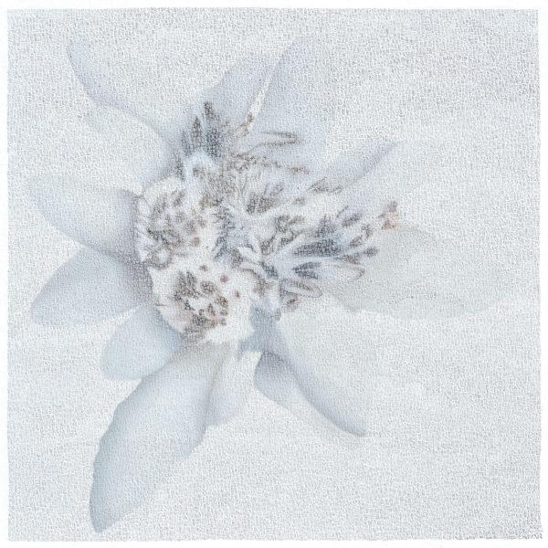 Edel Weiss 100 x 100 cm
